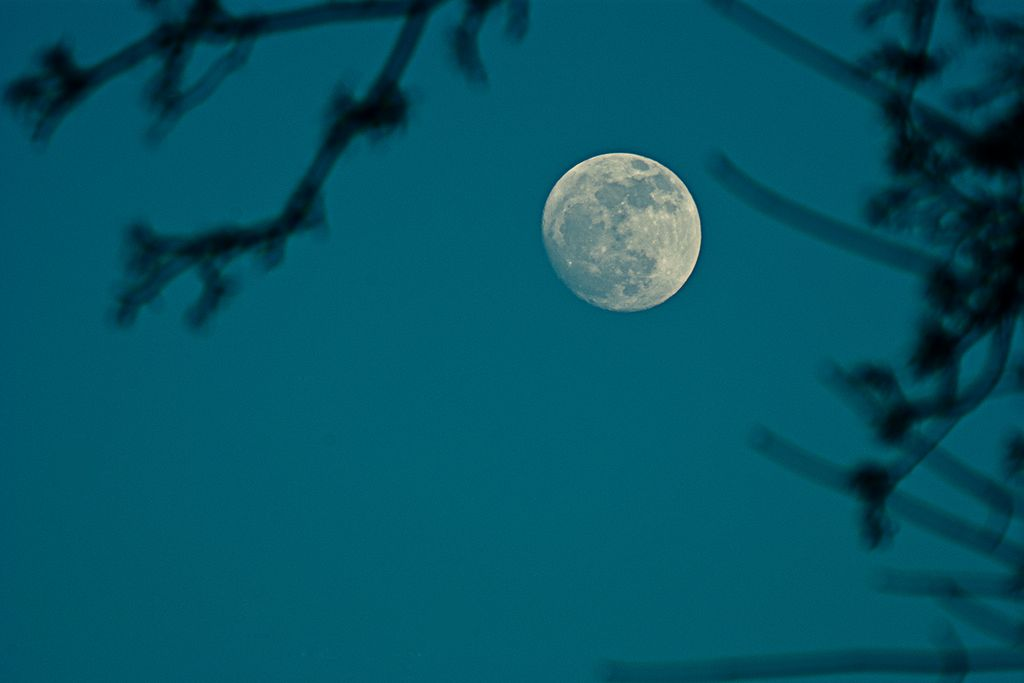 Vergrößern: EIn Mond am Abendhimmel, im Vordergrund Zweige eines Baumes